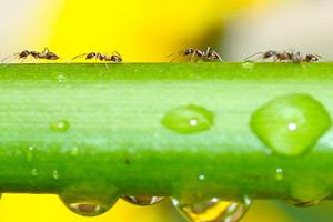 comment les fourmis avancent sans causer d embouteillages. Black Bedroom Furniture Sets. Home Design Ideas