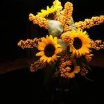 fleurs rael raelien extraterrestres ovni ambassade