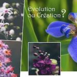 Évolution ou création