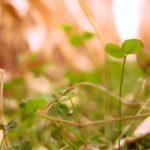 sauver des terres dégradées