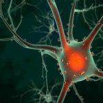 plasticité neuronale Raël-science Juillet-Août