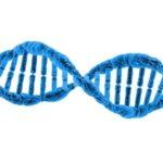 3D des chromosomes
