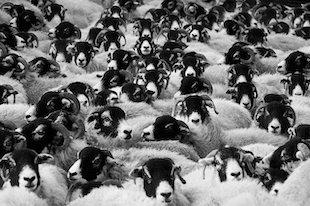 conformisme social