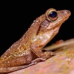 l'extinction animale s'accélère sur la planète : la biodiversité et l'humanité en danger