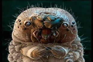 Demodex, mite de la peau