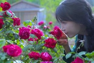 les roses en Chine