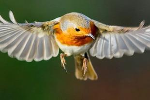 système visuel des oiseaux