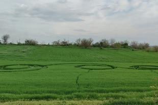 crop circles de 2021