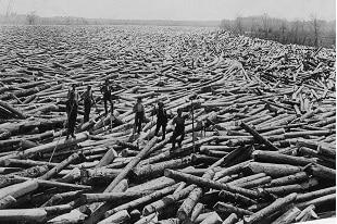 Déforestation : dévaster une planète...